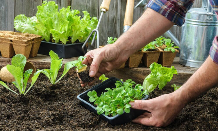 Organic Farming - Sangaria